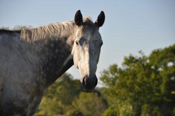 air_horse_one_1200x800